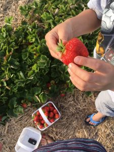 Food Literacy Strawberries