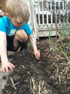 School Gardens Ottawa ON with Cultivating Cooks